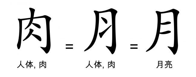 "<strong>图36:</strong>""月""字旁经常被用做指代人身体部分的偏旁,这是一种简化——注意上图汉字中""斜条纹""的方向变化的相似之处。""月""亮总是比实际的脊柱更加容易接受些,后者即最左边的汉字所呈现的画面。"