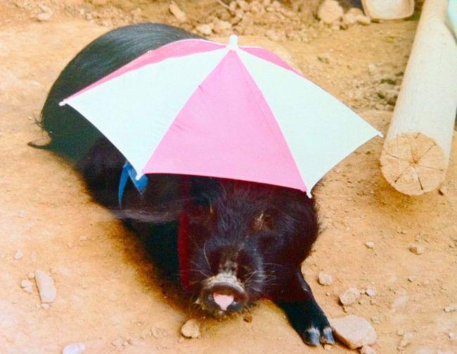 sporky-with-umbrella-hat